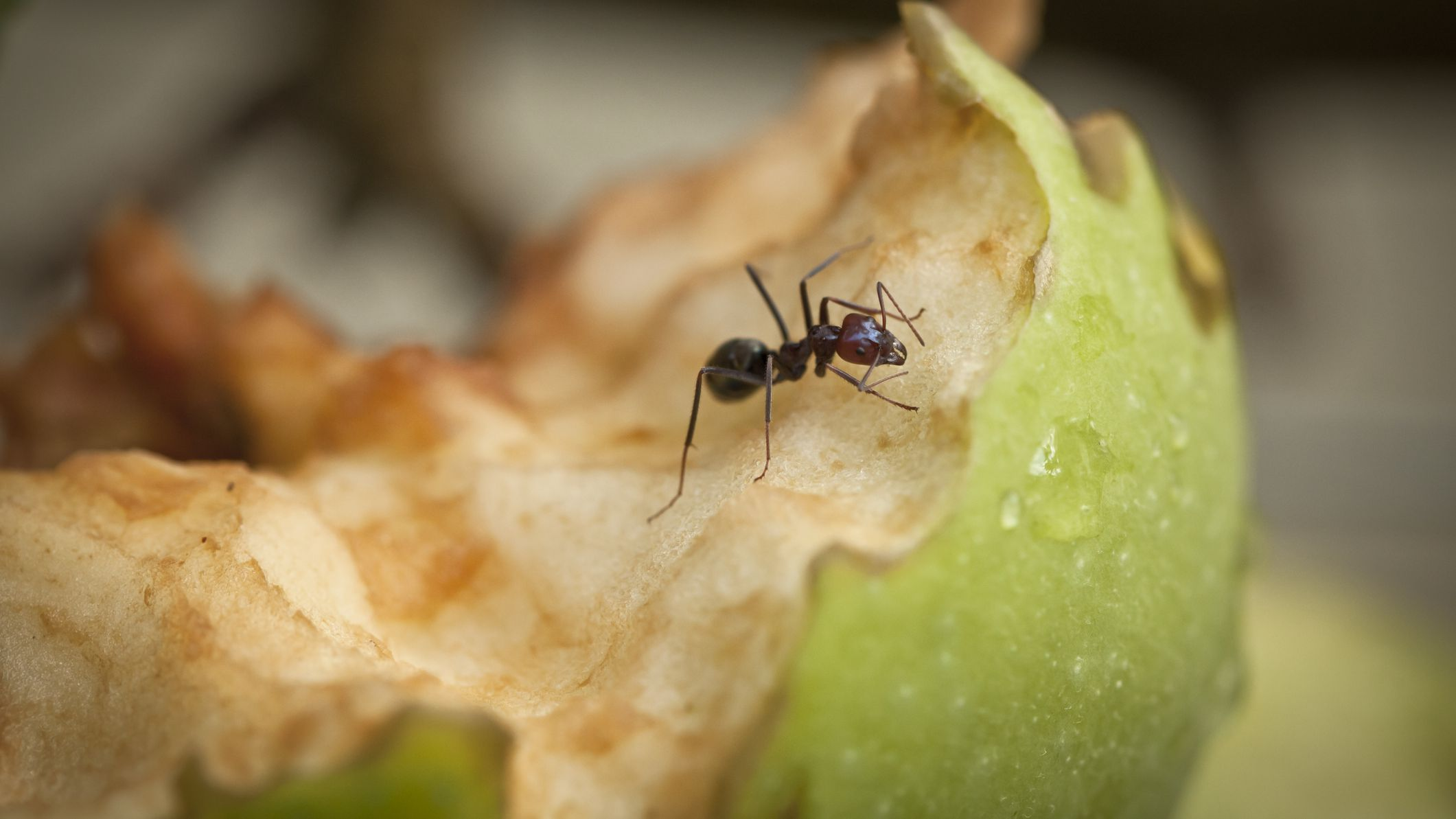 What do ants eat - Image By treehugger