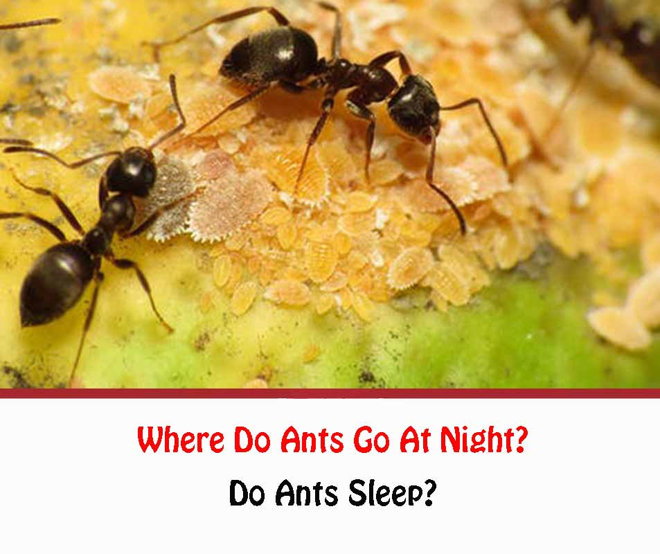 Where Do Ants Go At Night
