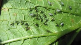 How To Get Rid Of Small Black Bugs On Plants Naturally