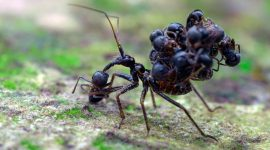 What Insects Eat Ants?