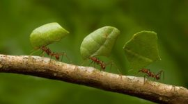 How To Get Rid Of Leaf Cutter Ants Naturally