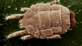How To Get Rid Of Mold Mites Naturally