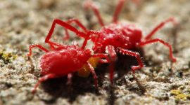 How to Get Rid of Red Spider Mites Naturally