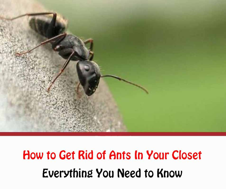 Ants In Your Closet
