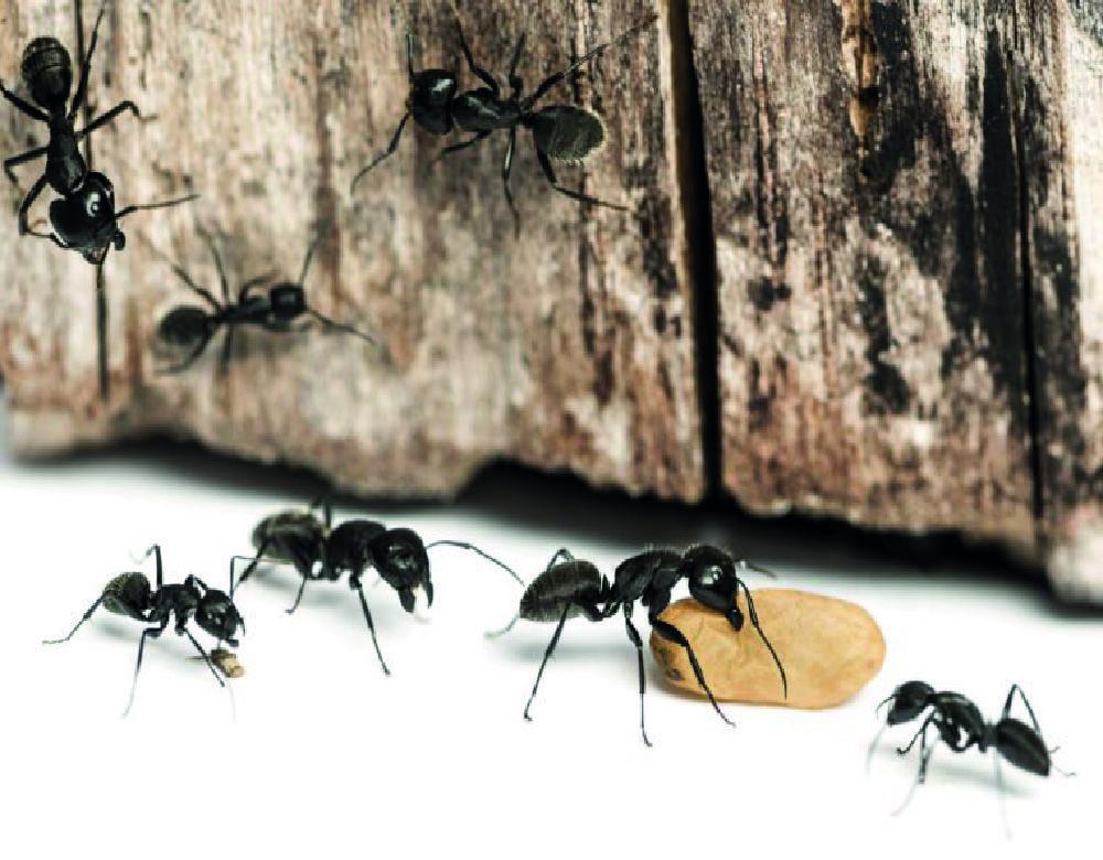 Can You Spray Ant Spray on Carpet