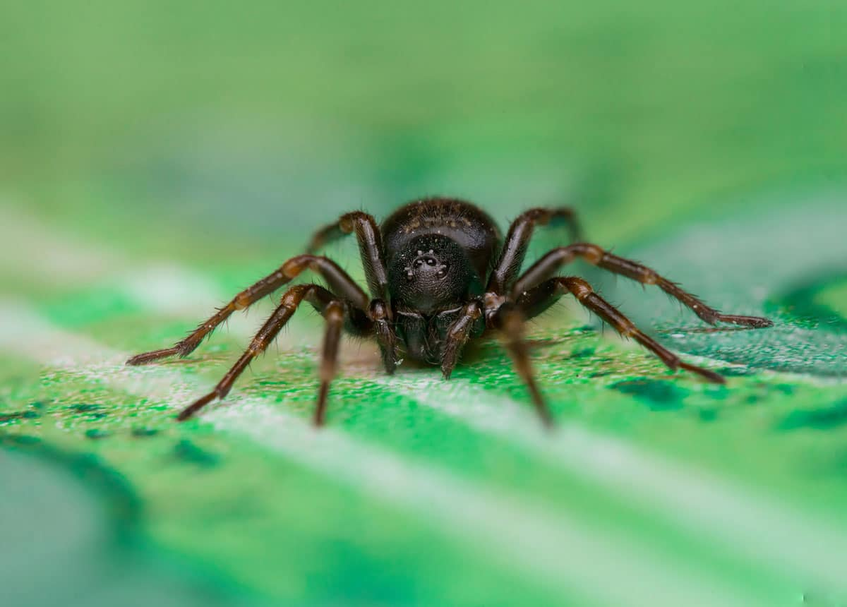 Does Permethrin Kill Spiders 2020 - Image By madisoncountypest