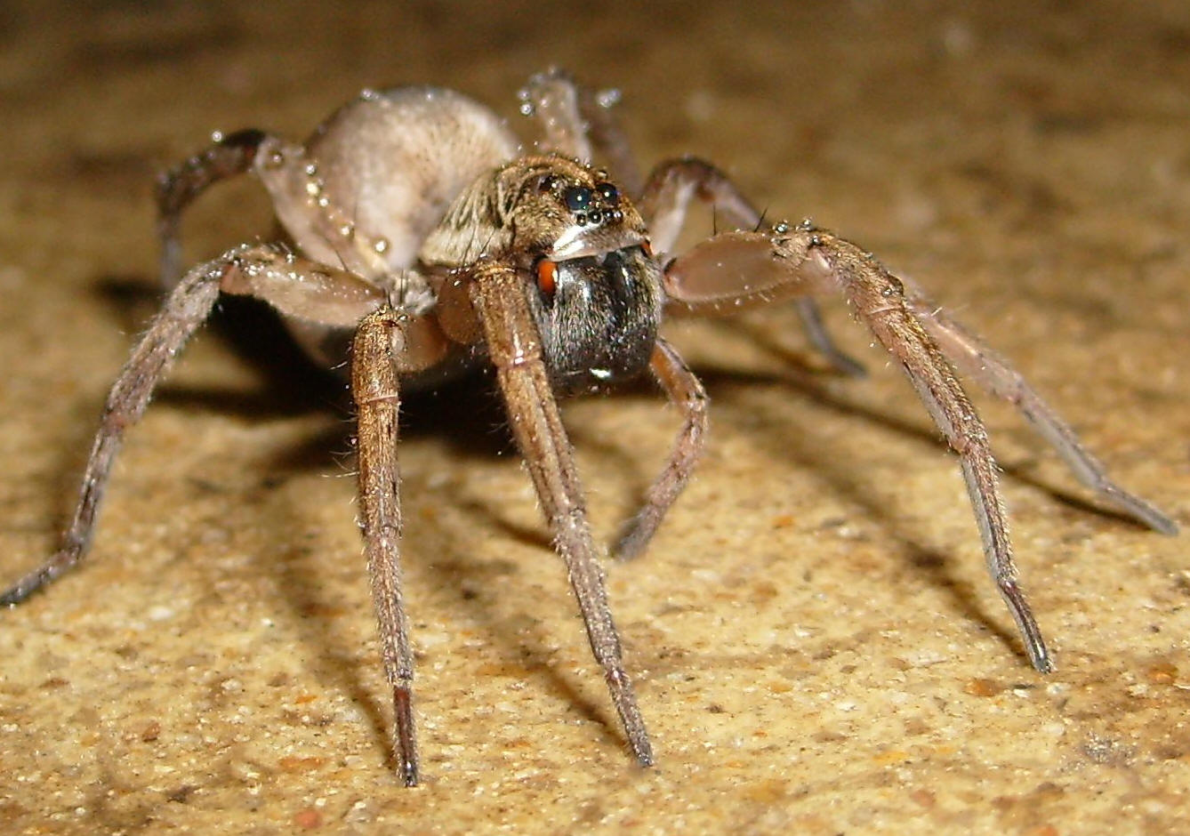 Does Permethrin Repel Spiders