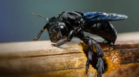 How To Get Rid Of Carpenter Bees With WD-40