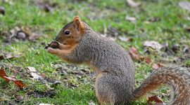 How To Stop Chipmunks From Eating Sunflowers?