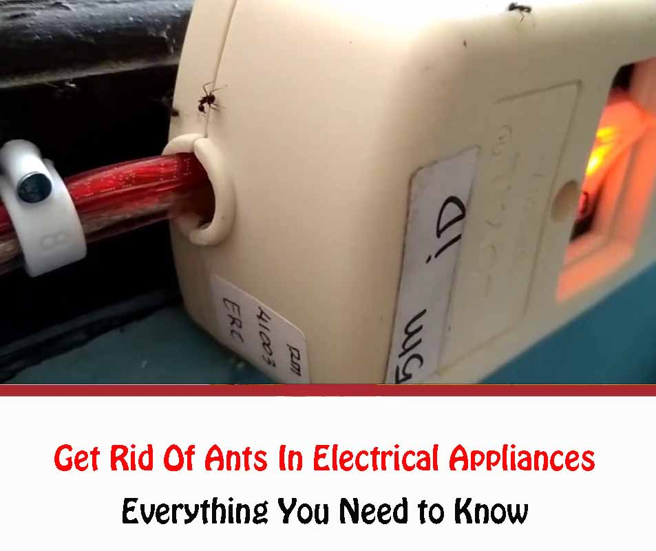 Get Rid Of Ants In Electrical Appliances