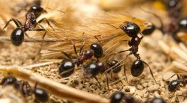How To Get Rid Of Ants Without Killing Them
