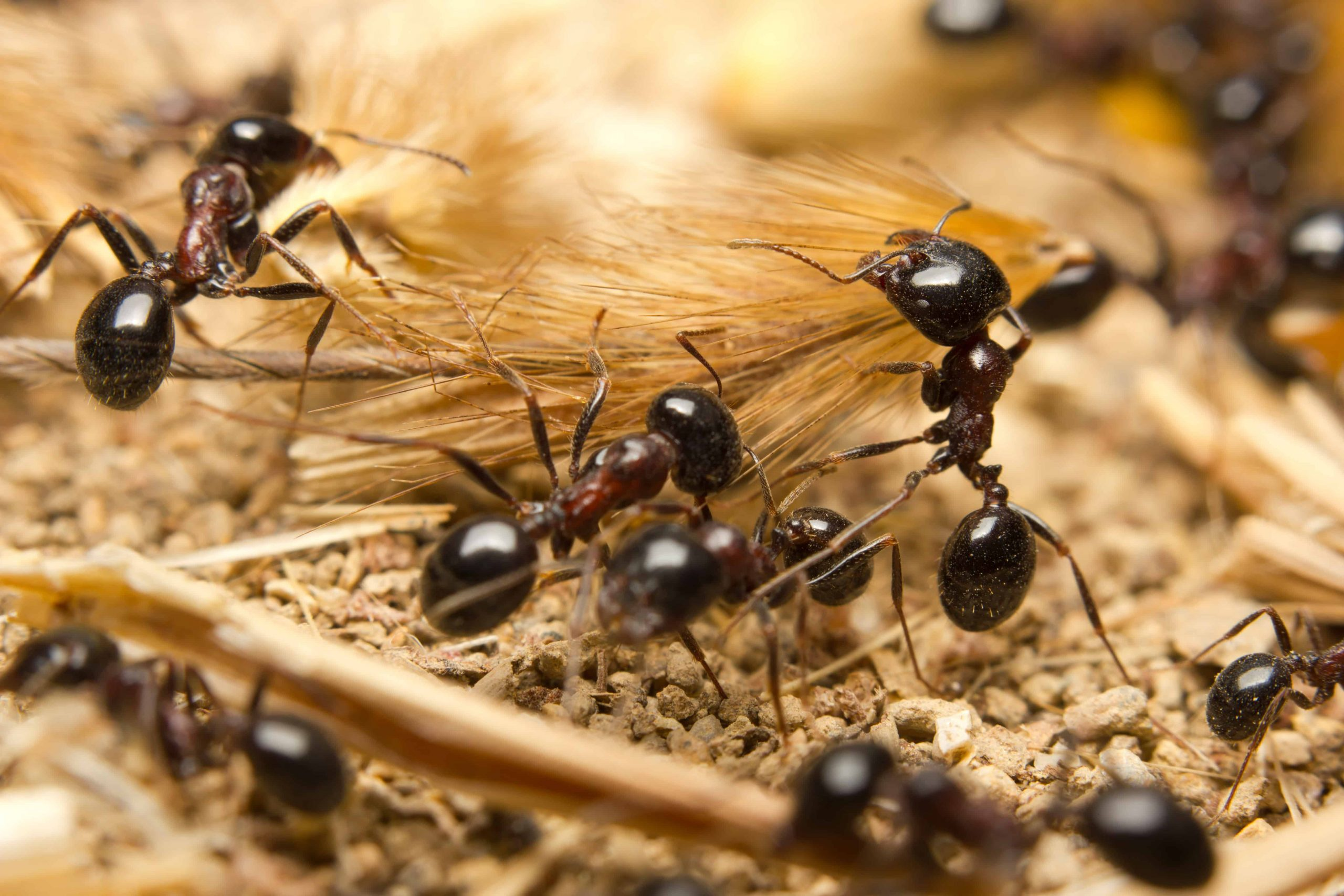 How To Eliminate Ants Without Killing Them