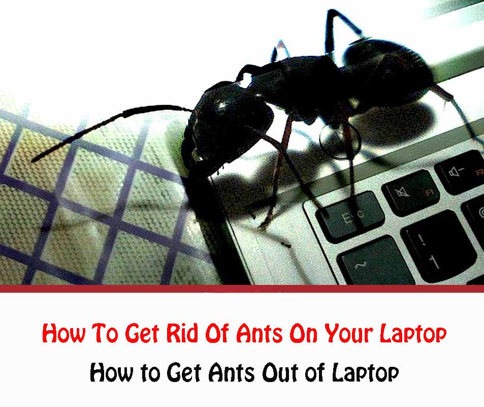 How To Get Rid Of Ants On Your Laptop