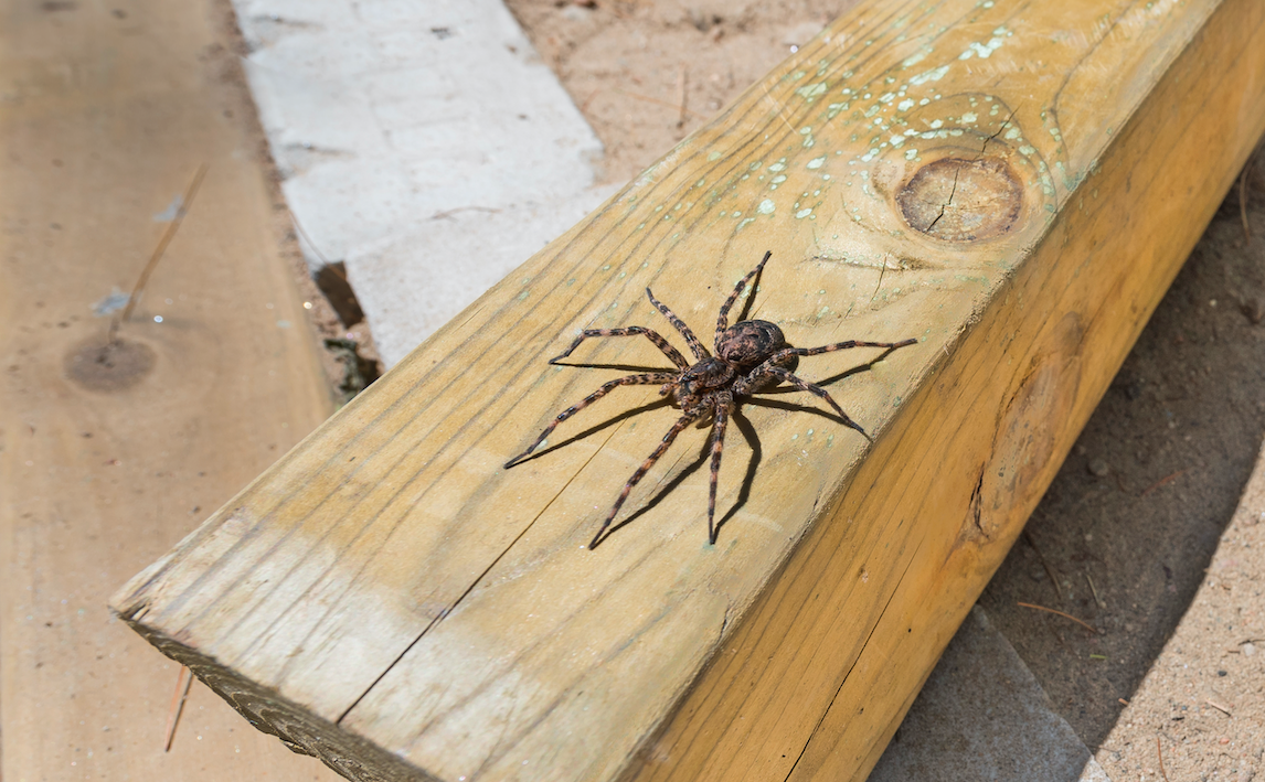 How To Prevent Dock Spiders - Image By facesmag