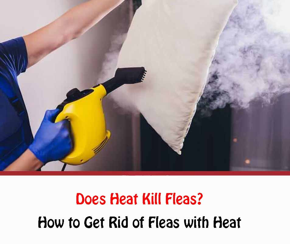 How to Get Rid of Fleas with Heat