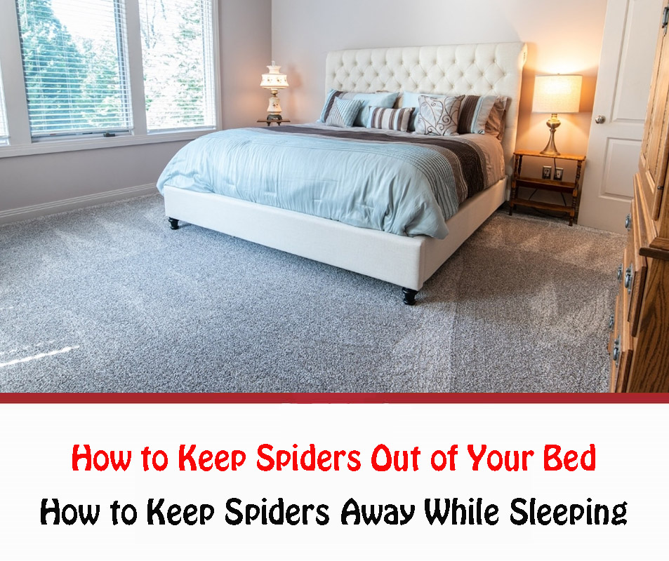 How to Keep Spiders Away While Sleeping