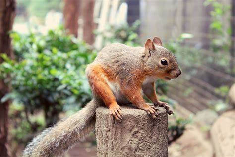 Less squirrel