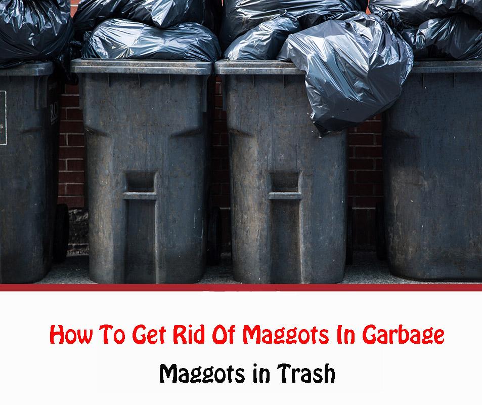 Maggots in Trash