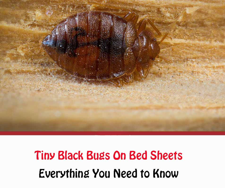 Tiny Black Bugs On Bed Sheets