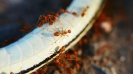 How To Get Rid Of Ants In Electrical Appliances