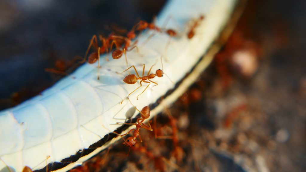 Types Of Ants That Damage Electrical Appliances