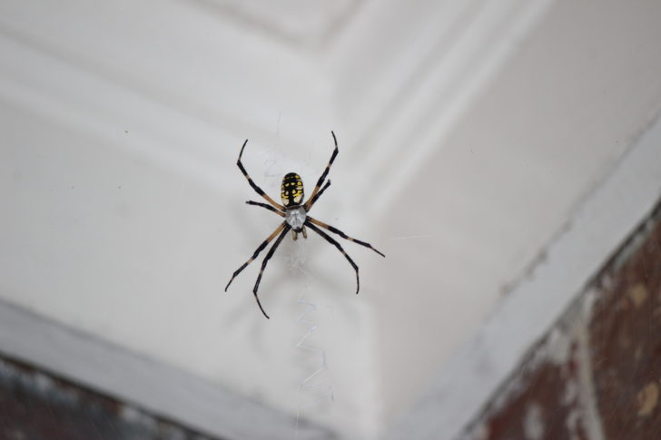 What Causes Spiders In Your Bedroom