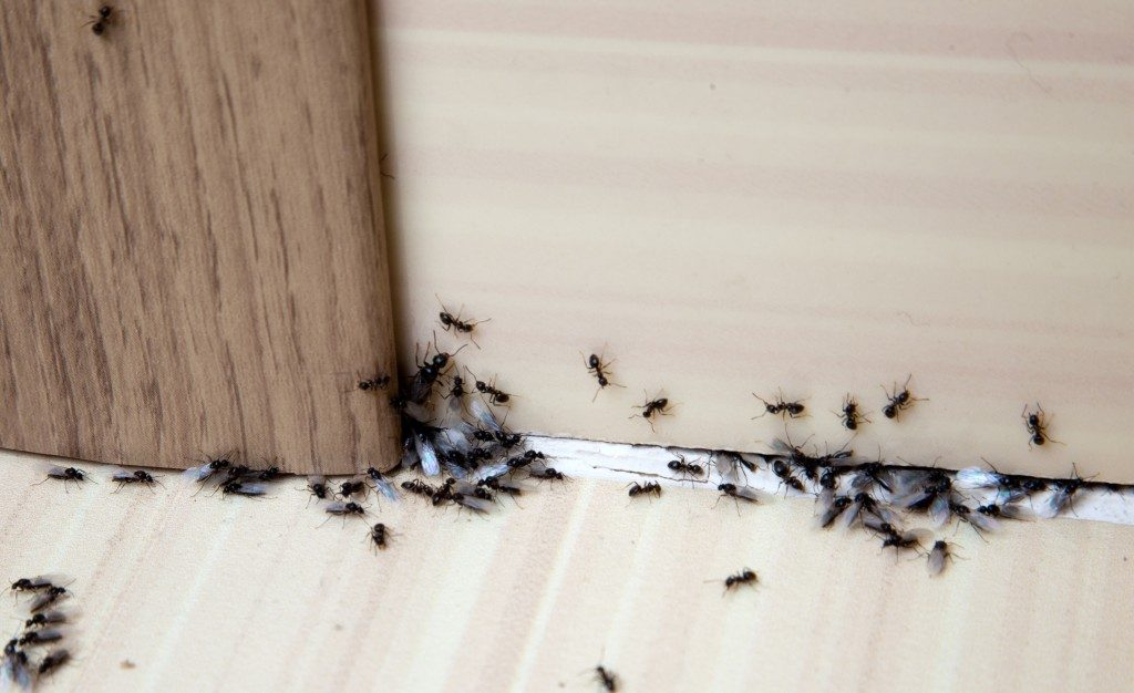 What Damage Can Ants Do To Your Electrical Appliances - Image By bootsontheroof