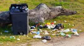 How To Get Rid Of Maggots In Garbage Naturally