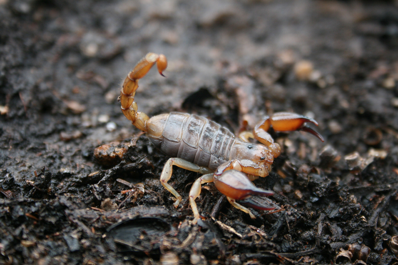 What Do Scorpions Hate The Most