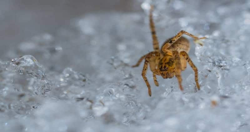 What Do Spiders Do in the Winter - Image By beyondthetreat