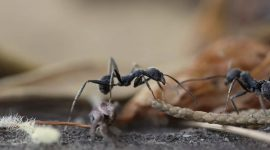 How to Get Rid of Ants In Your Closet