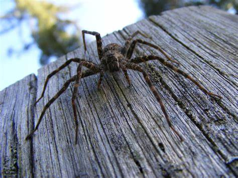 Why Do You Have Dock Spiders - Image By DeviantArt