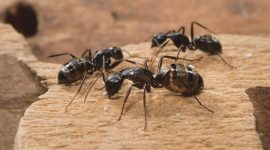 How To Get Rid Of Ants In The Carpet