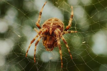 Barn Spiders: How To Get Rid Of Barn Spiders Naturally