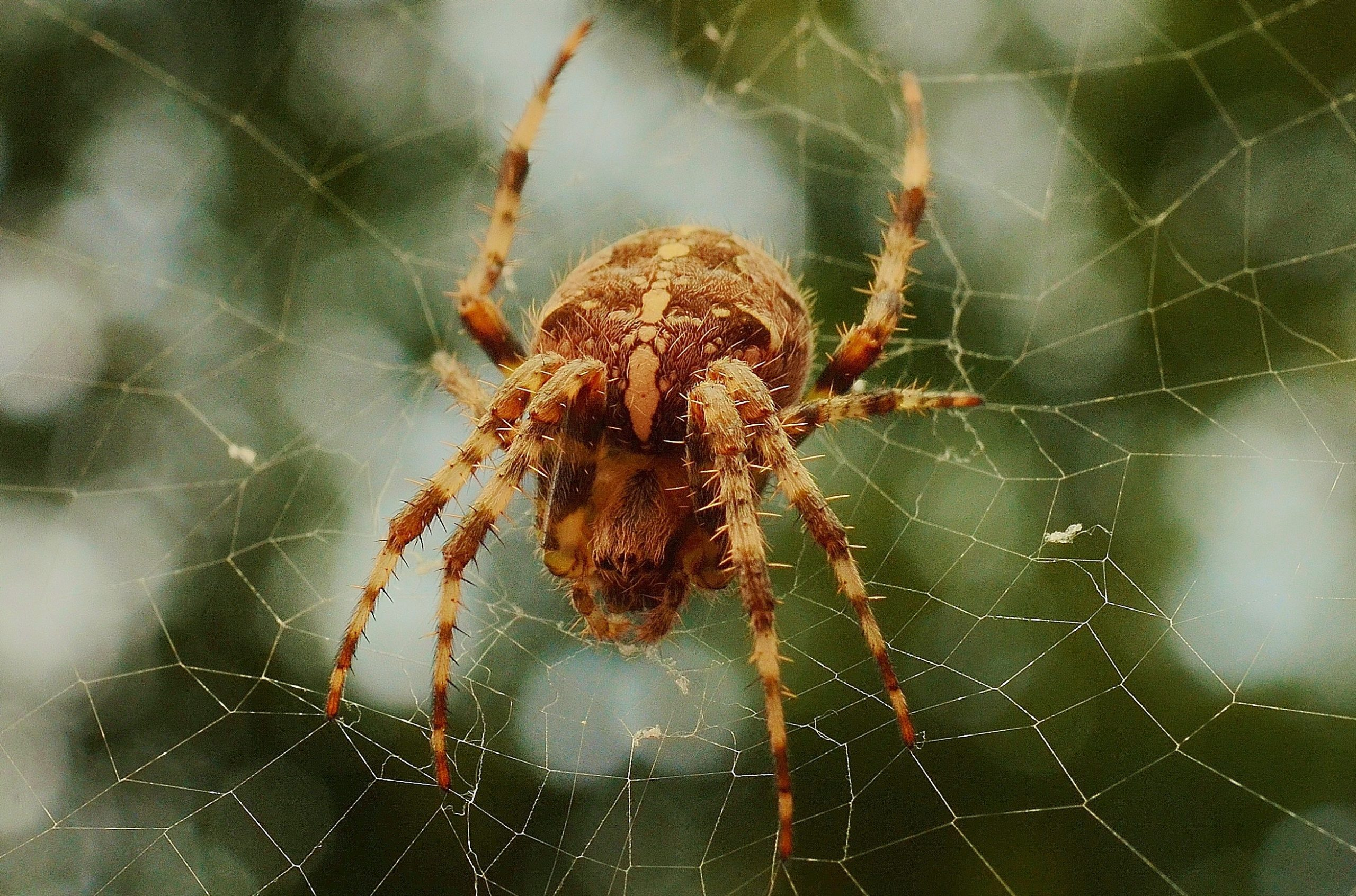 Barn spider life cycle - Image By Pexels