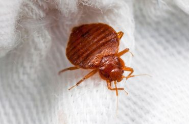 How to Avoid Bed Bugs at the Movie Theater?
