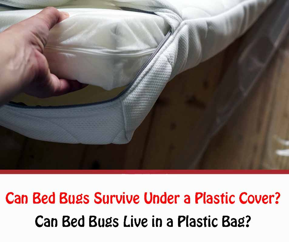Can Bed Bugs Live in a Plastic Bag