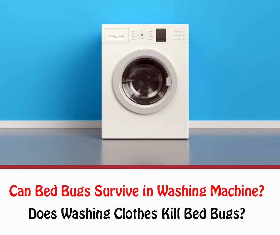 Can Bed Bugs Survive in Washing Machine