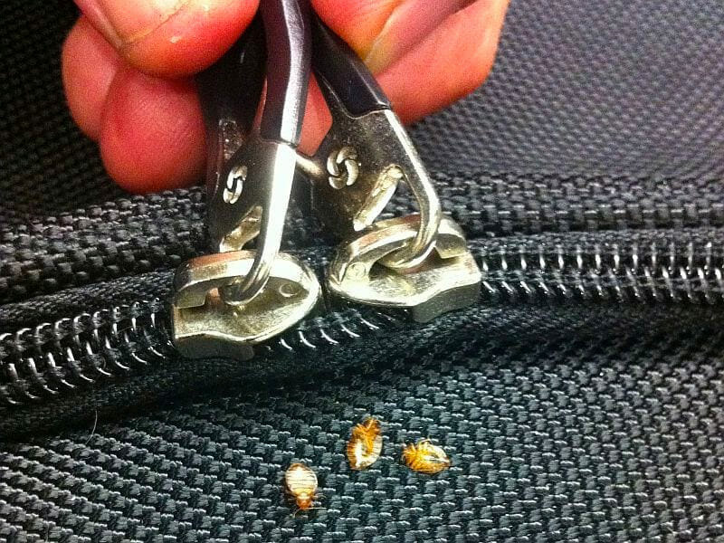 Can You Get Bed Bugs From A Washing Machine - Image By citypests