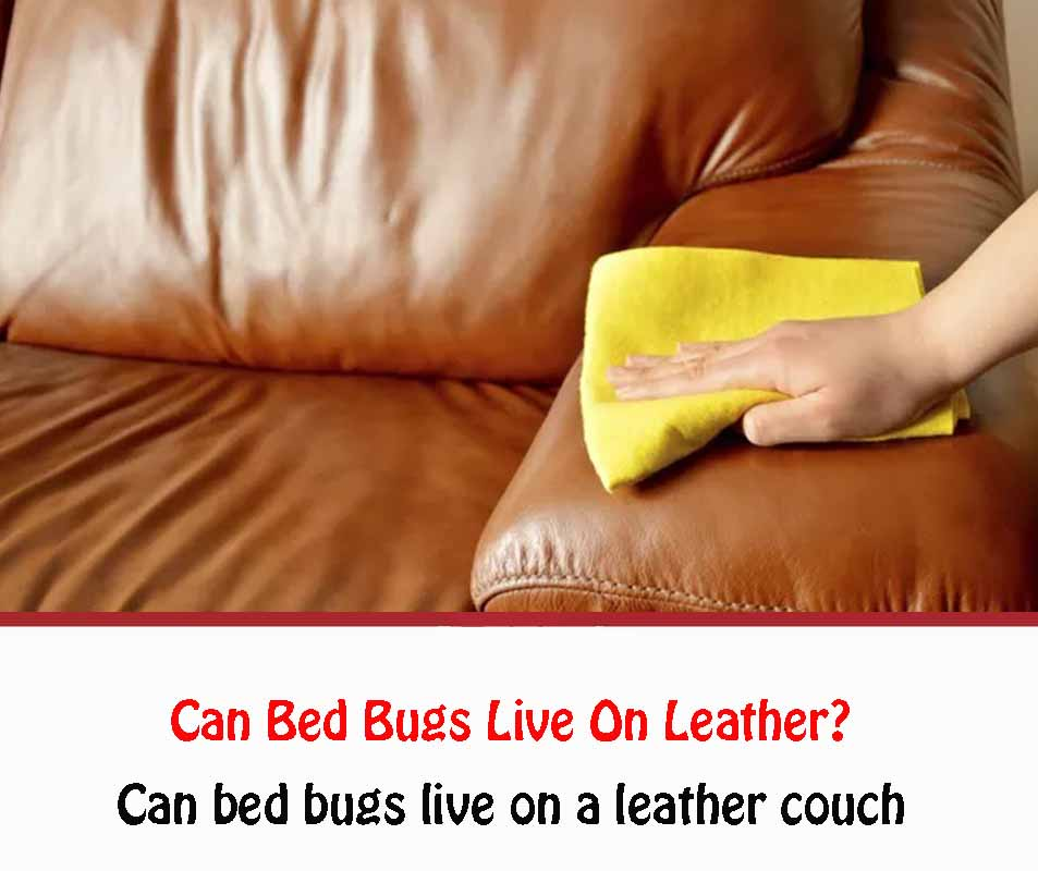 Can bed bugs live on a leather couch