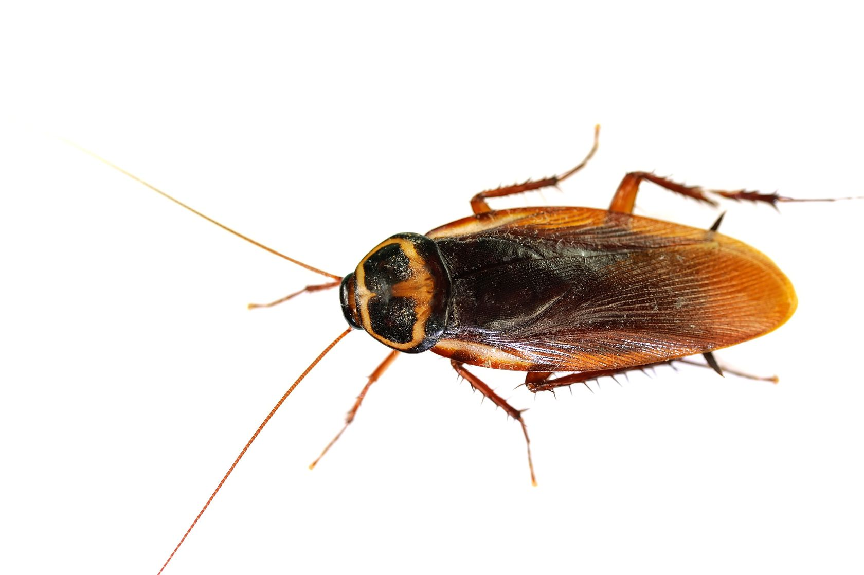 Cockroaches 2021