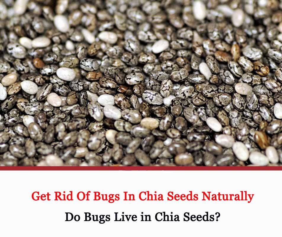 Get Rid Of Bugs In Chia Seeds Naturally