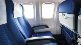 Can Bed Bugs Survive In Airplane?