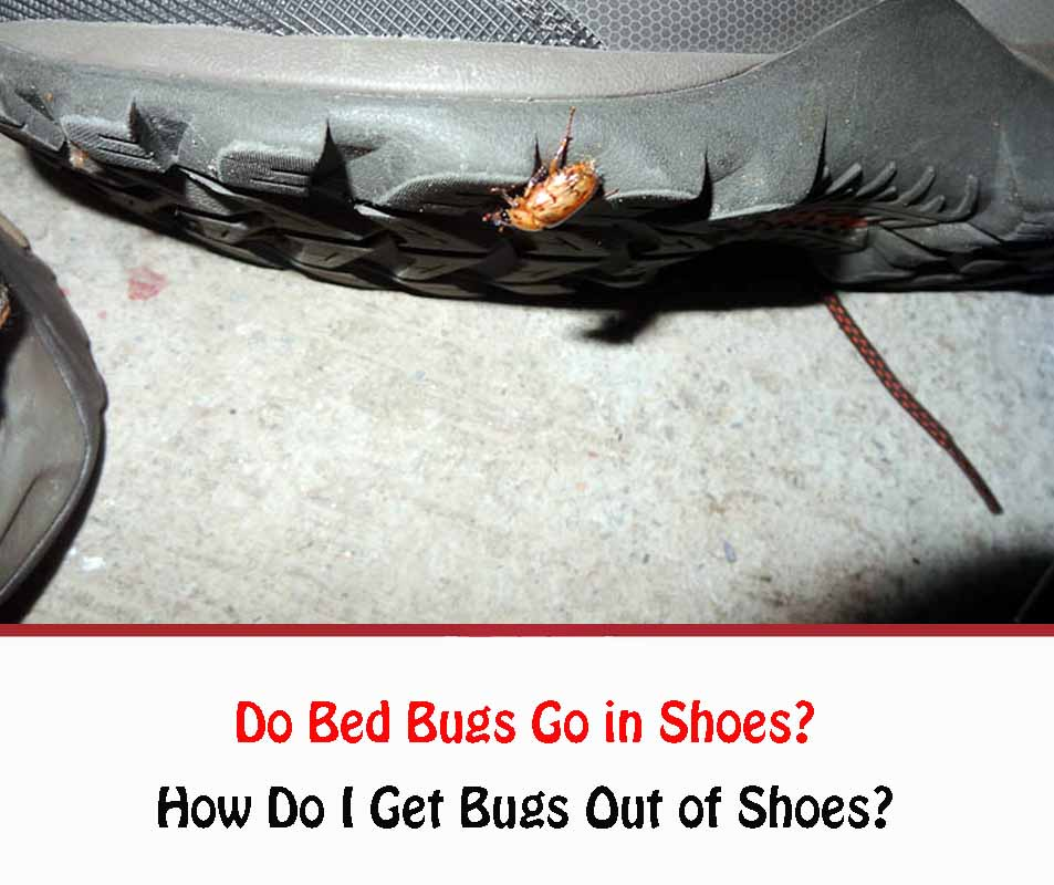 Do Bed Bugs Go in Shoes?