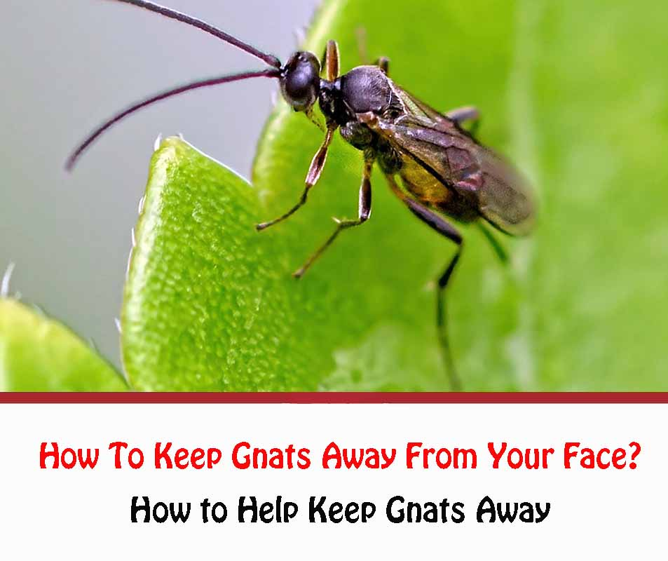 How To Keep Gnats Away From Your Face 2021