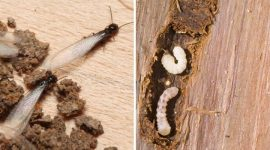 How to Get rid of Wood-Gnawing Bugs Naturally