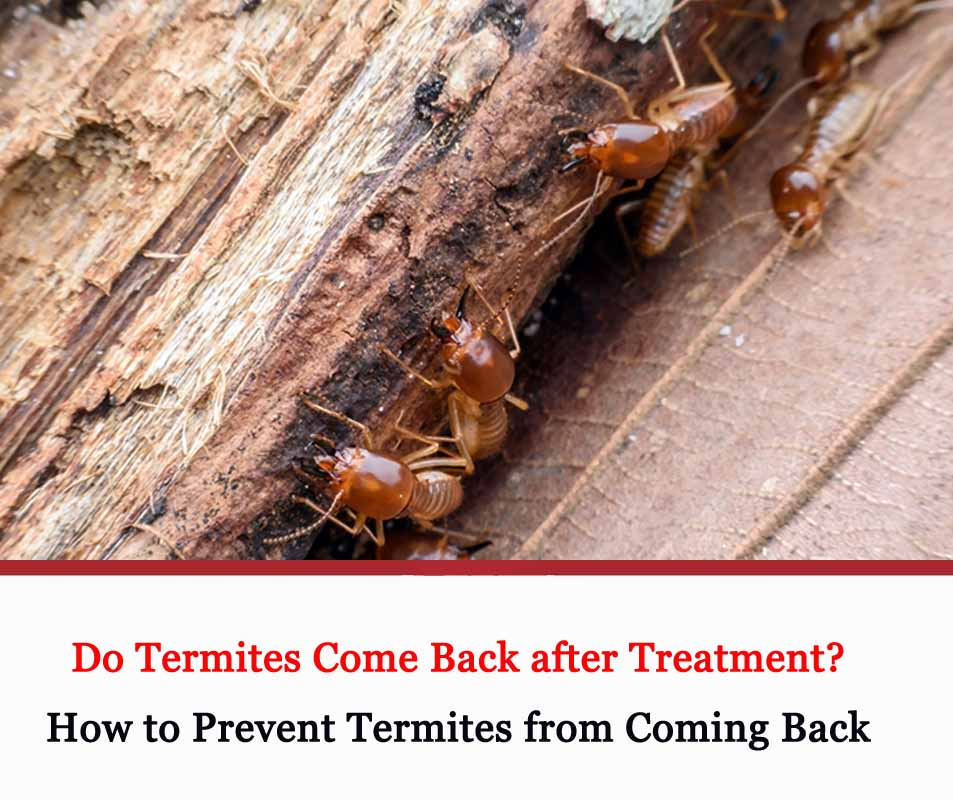 How to Prevent Termites from Coming Back