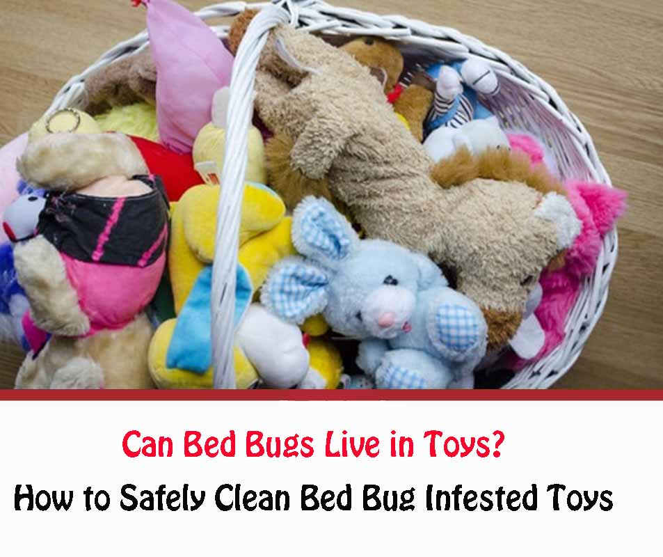 How to Safely Clean Bed Bug Infested Toys