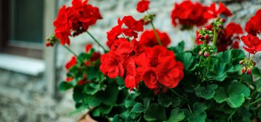 12 Plants that Repel Bees and Wasps