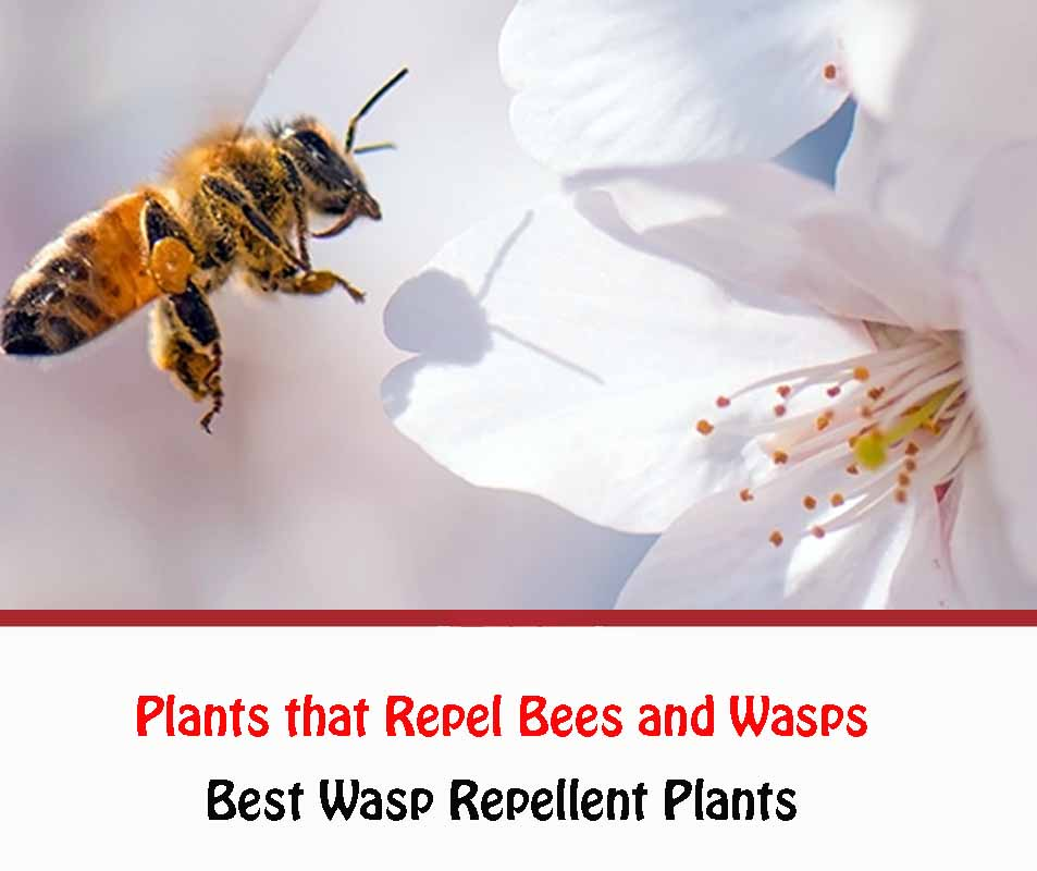 Plants that Repel Bees and Wasps 2021